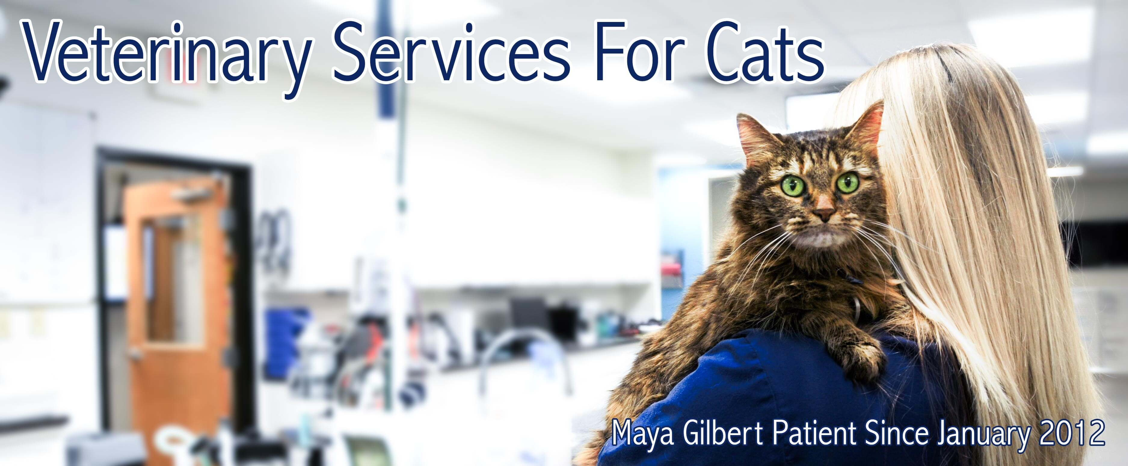 Veterinary Services For Cats