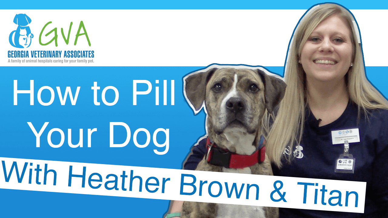 How To Pill Your Dog