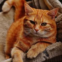 Mixed Breed Cat Breed Info
