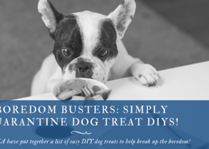 Boredom Busters: Simply Quarantine Dog Treat DIYs!