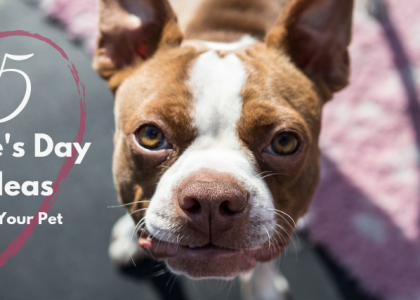 5 Valentine's Day Date Ideas for You and Your Pet