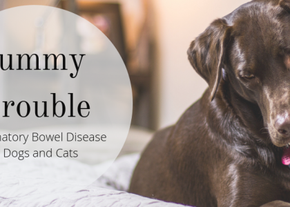 Tummy Trouble: Inflammatory Bowel Disease in Dogs and Cats