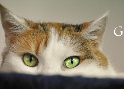 Photograph of cat, focusing on eyes