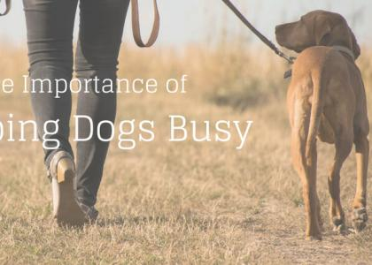 The Importance of Keeping Dogs Busy