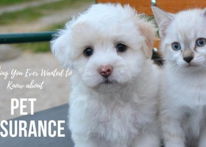 Everything you ever wanted to know about pet insurance