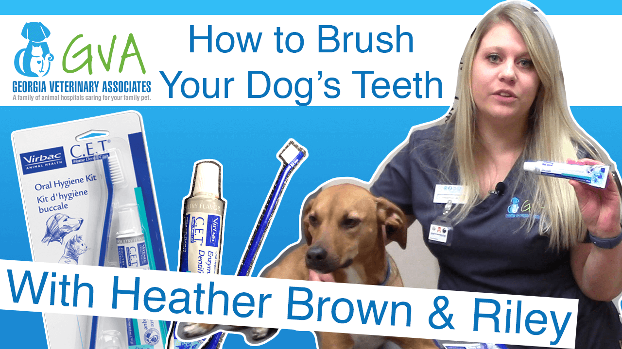 How To Teeth Brushing